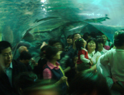 Shanghai Oceanarium crowd on a major holiday