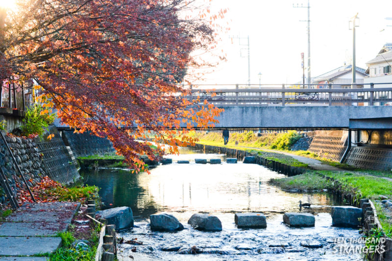 Fall foliage in Kawagoe
