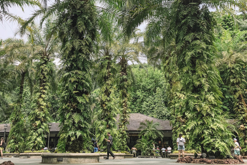 Singapore Botanic Gardens - Free Singapore Attractions